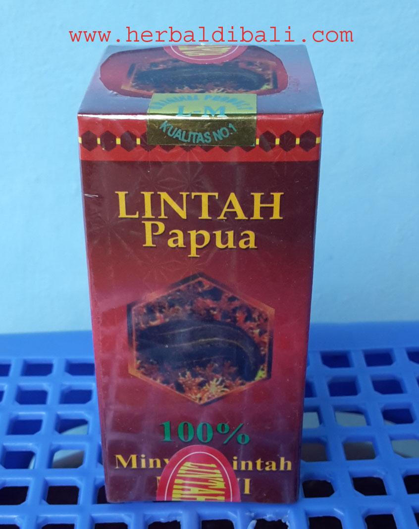 jual minyak lintah asli papua di denpasar bali jual